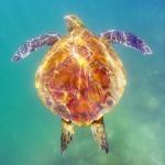 ガラパゴス諸島No.1の美観