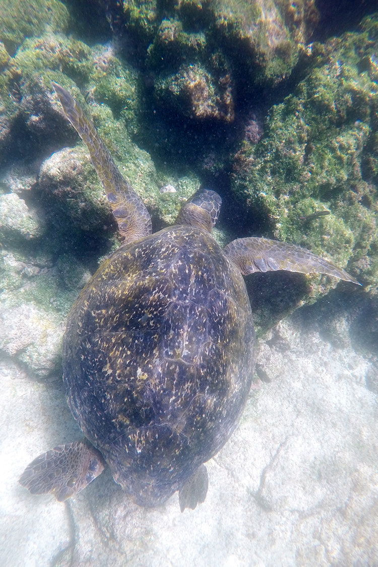 ガラパゴス諸島 バルトロメ島 シュノーケリング