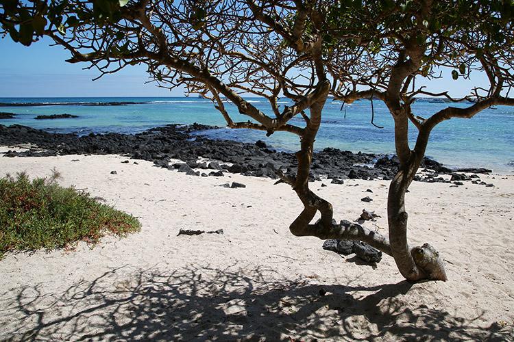 ガラパゴス諸島 プエルト・アヨラ サンタ・クルス島
