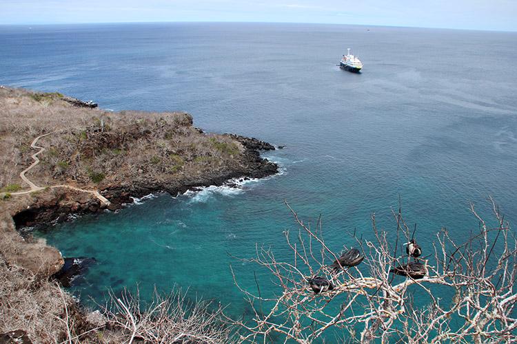 サンクリストバル島 ティヘレータスの丘 グンカンドリ
