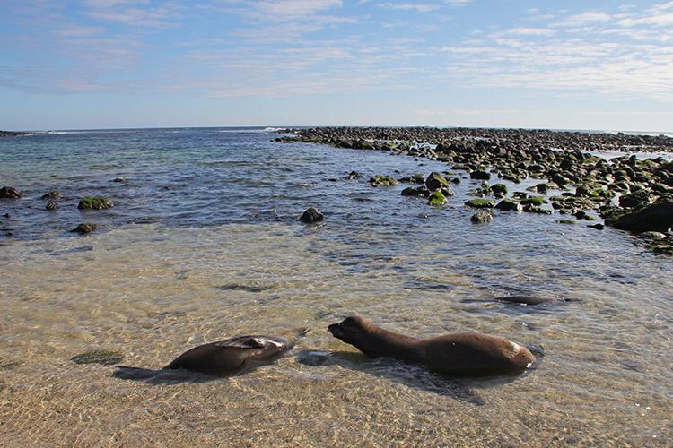 サン・クリストバル島 Las Loberias アシカ