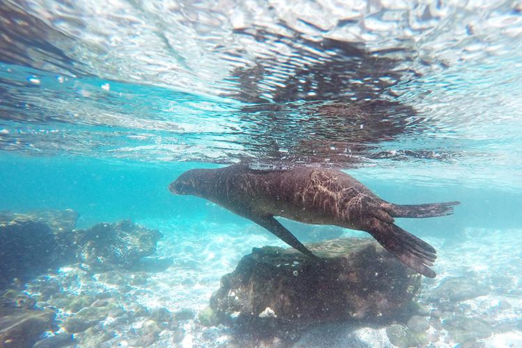 フロレアーナ島 ガラパゴス諸島 ツアー