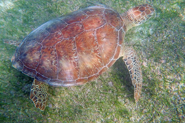 アクマルビーチ メキシコ ウミガメ