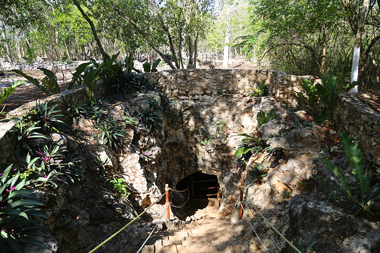 セノーテ Cenote Palomista メキシコ