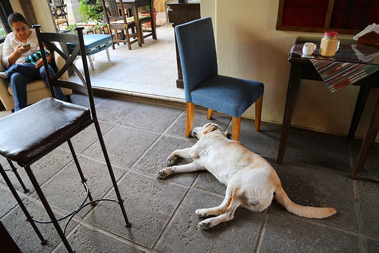 グアテマラ 珈琲 カフェ