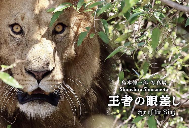 写真展 ライオン