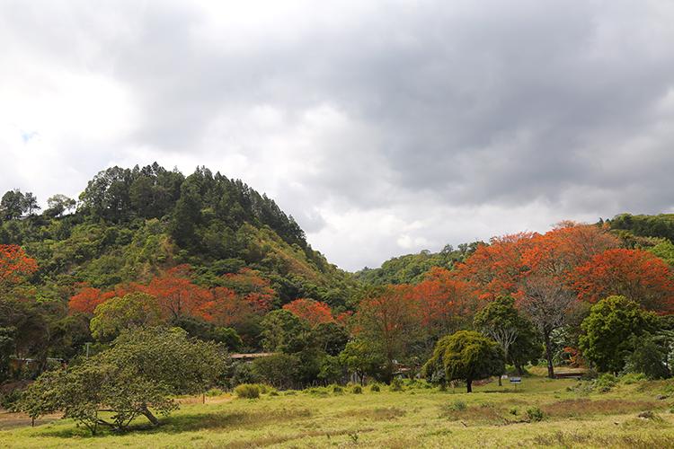 ボケテ パナマ