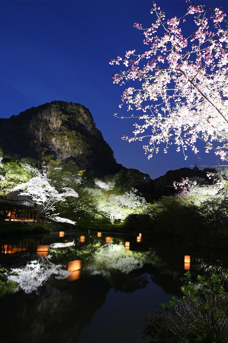 九州 春 2017 桜 SAKURA