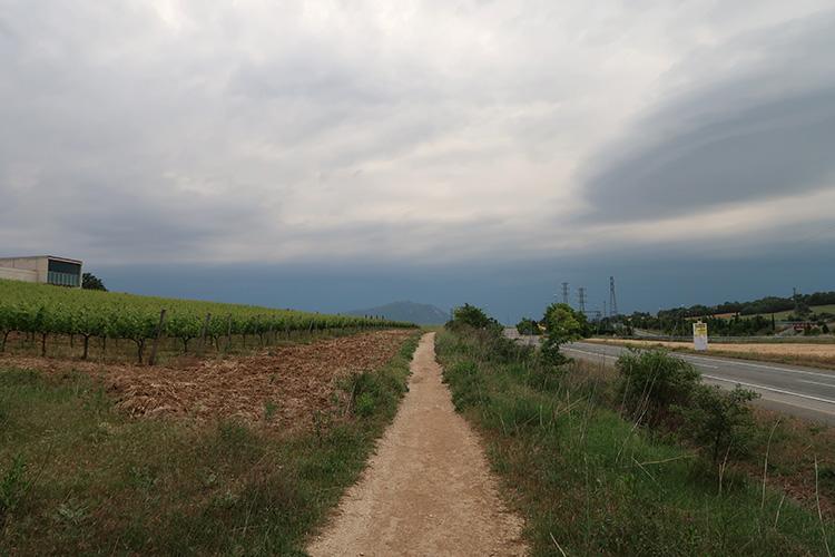 カミーノ ブドウ畑 スペイン巡礼
