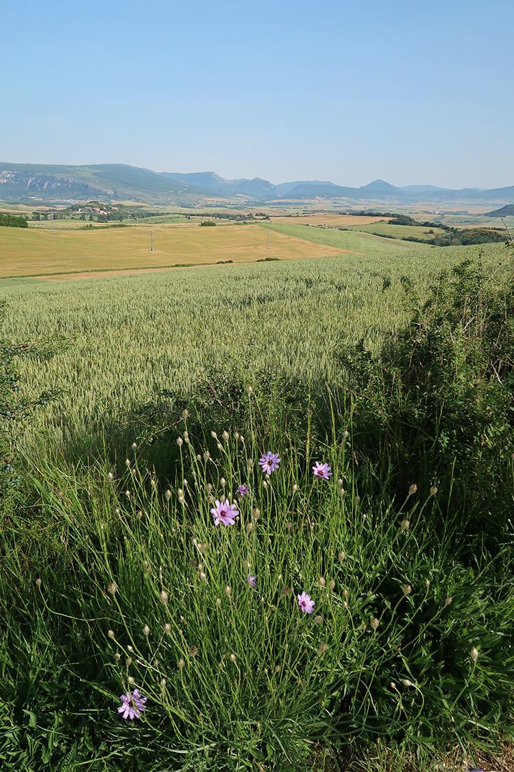 スペイン巡礼 カミーノ 風景 景色