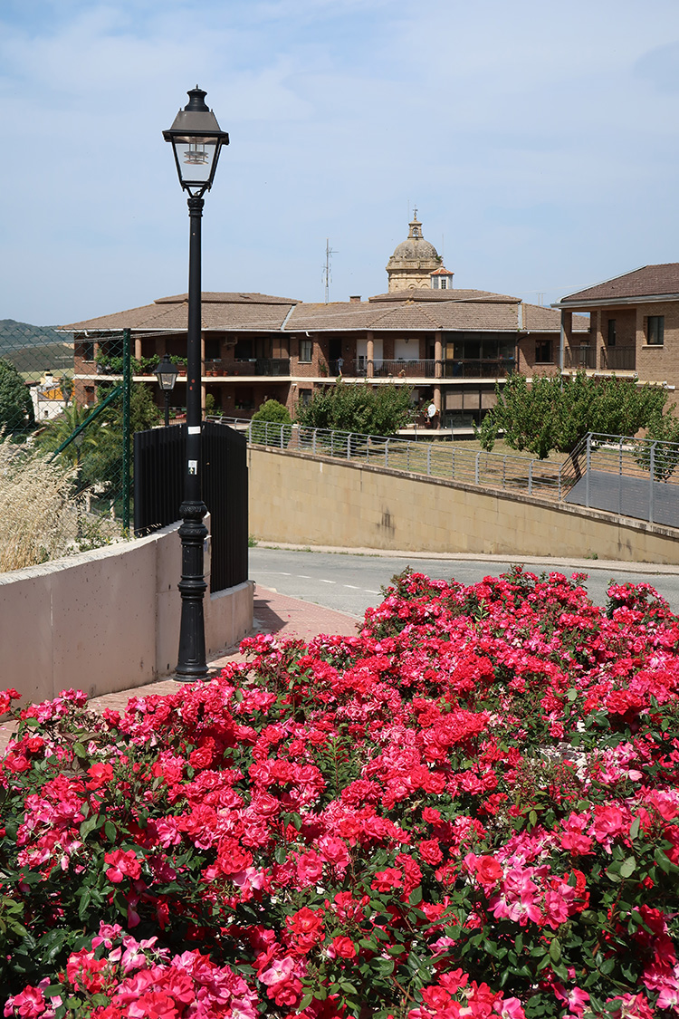 Mañeru camino スペイン巡礼