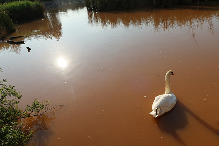 グラヘラ貯水池 カミーノ