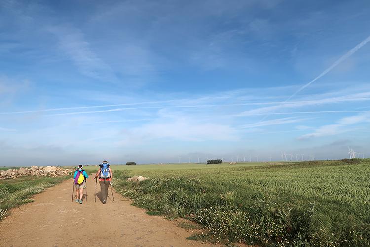 カミーノ 一番美しい道 景色 ポピー 風車 飛行機雲