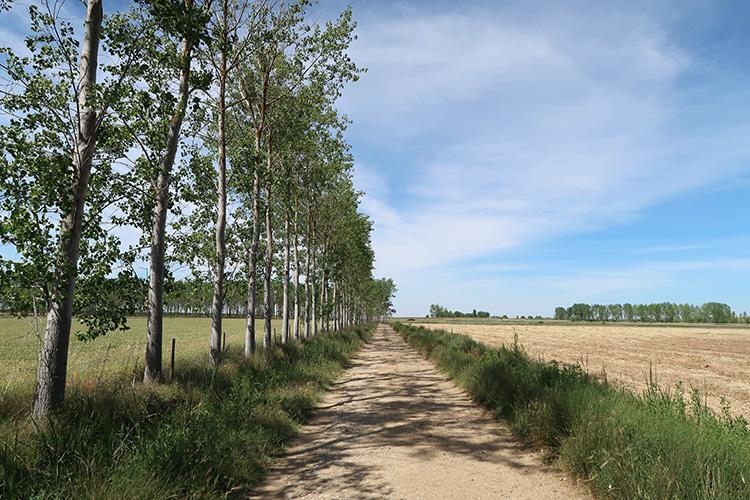 カミーノ 星の道 フランス人の道 巡礼路