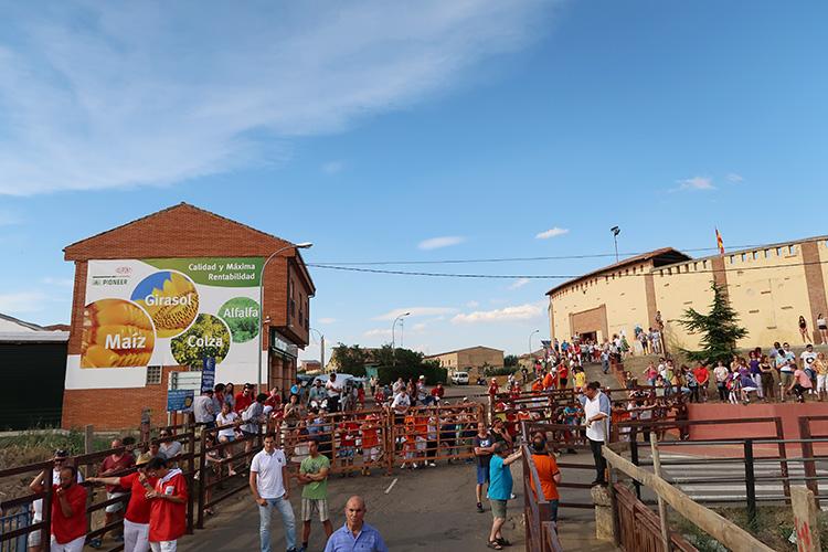 サンフェルミン 牛追い祭り サアグーン