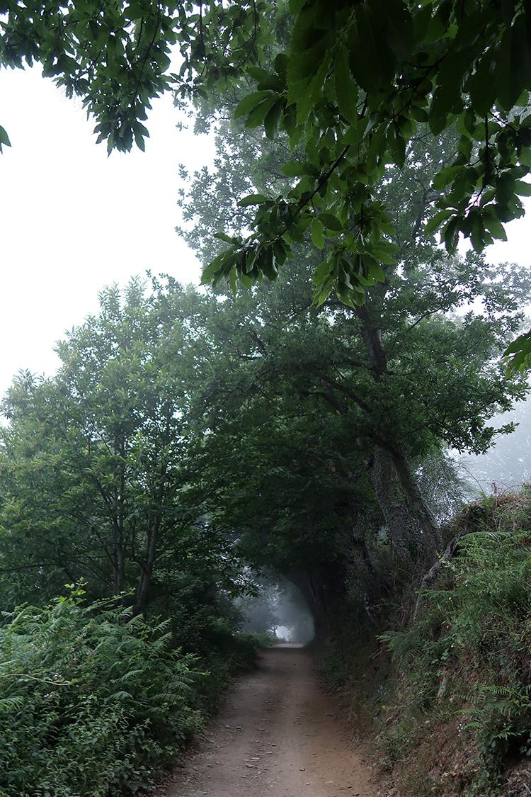 森の中 カミーノ ガリシア州