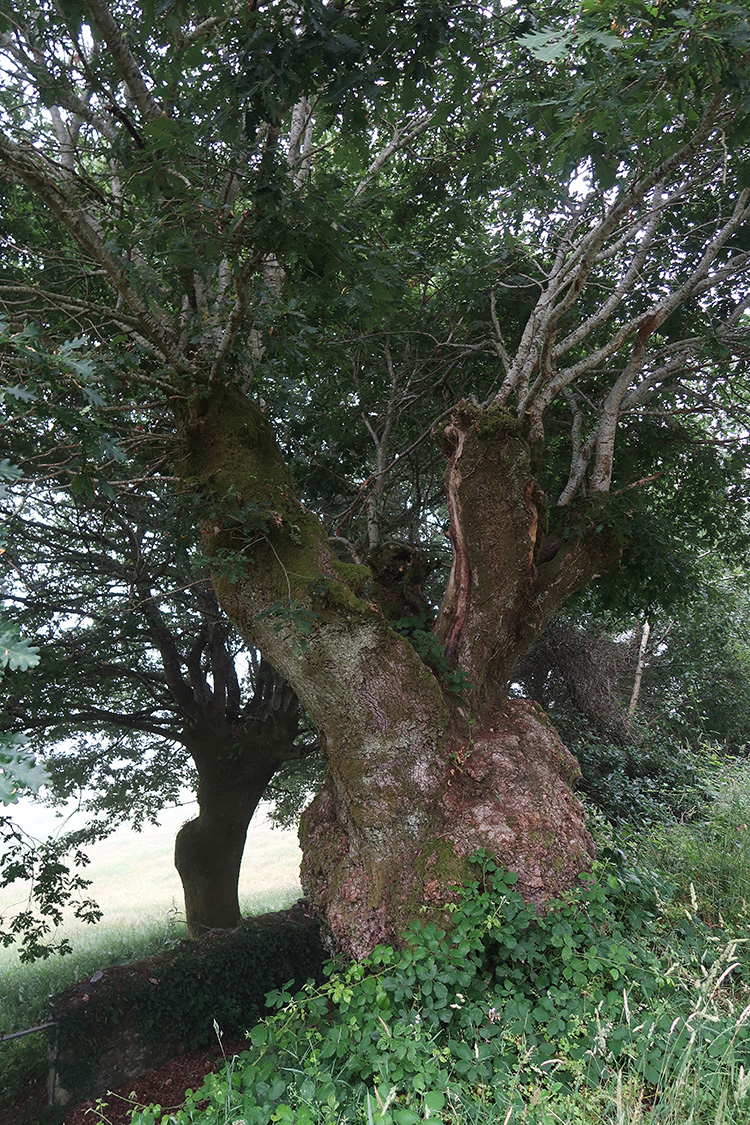 ガリシア州 森の道 山道 樹木