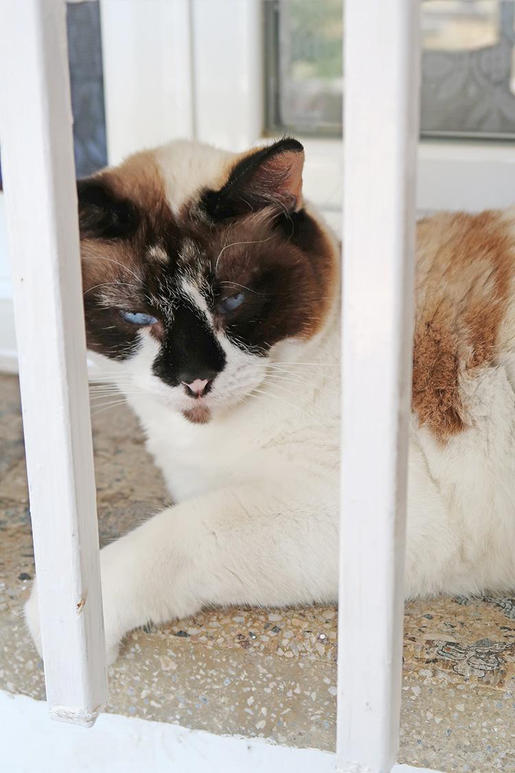 猫 カミーノ にゃんこ