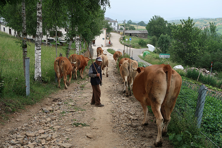 牧牛犬 ワンコ 森の中 スペイン