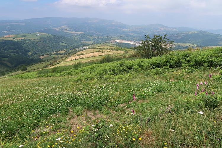 カミーノ サリアへの道 景色