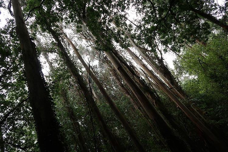 スペイン巡礼 大雨 森の道