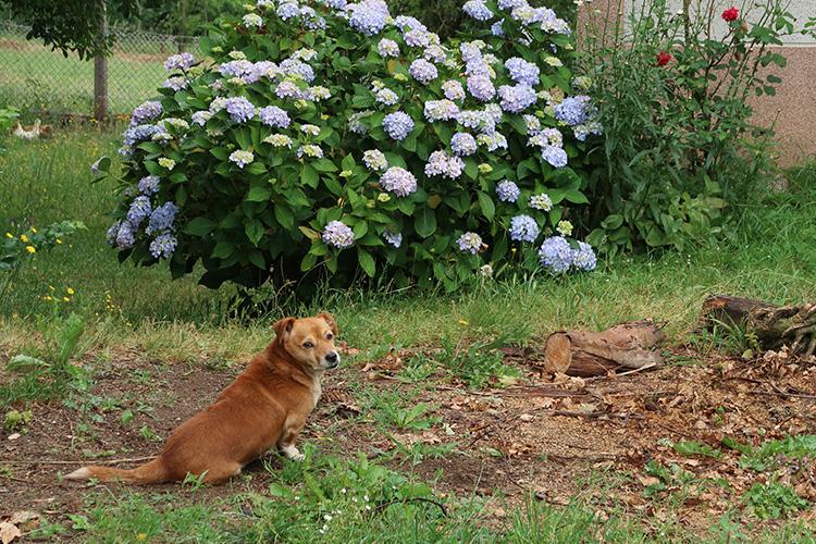 カミーノ スペイン 動物