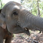 【チェンマイ】超おすすめ!象の楽園エレファントプライド