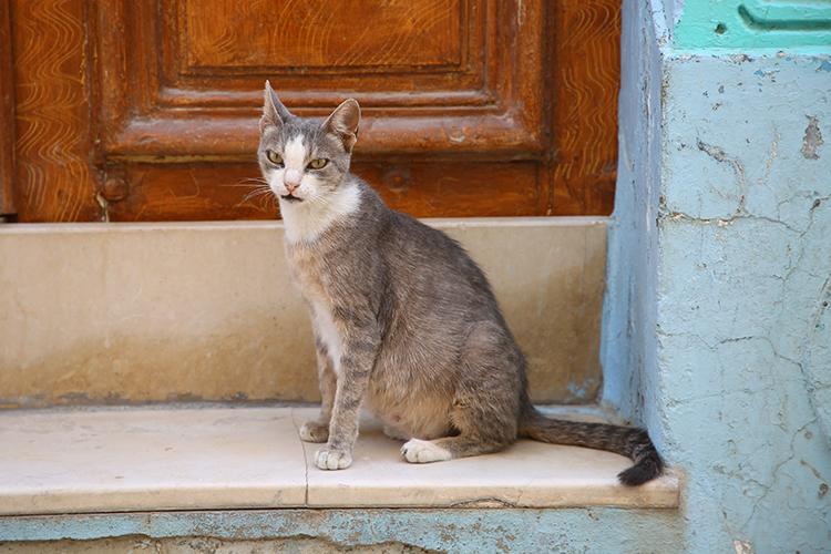 外国 路地裏の猫 ニャンコ