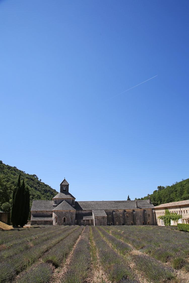 セナンク修道院 ラベンダー畑