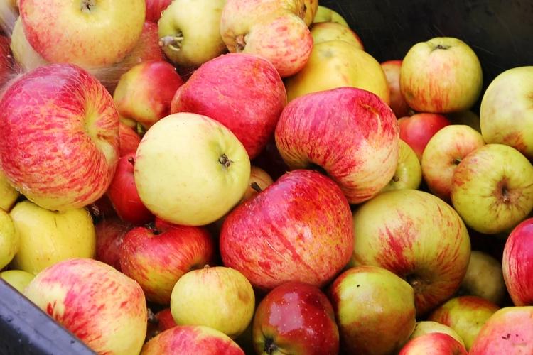 ルンド 収穫祭 りんご祭り スウェーデン