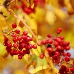【北欧オーロラ3日目/前半】色づく季節