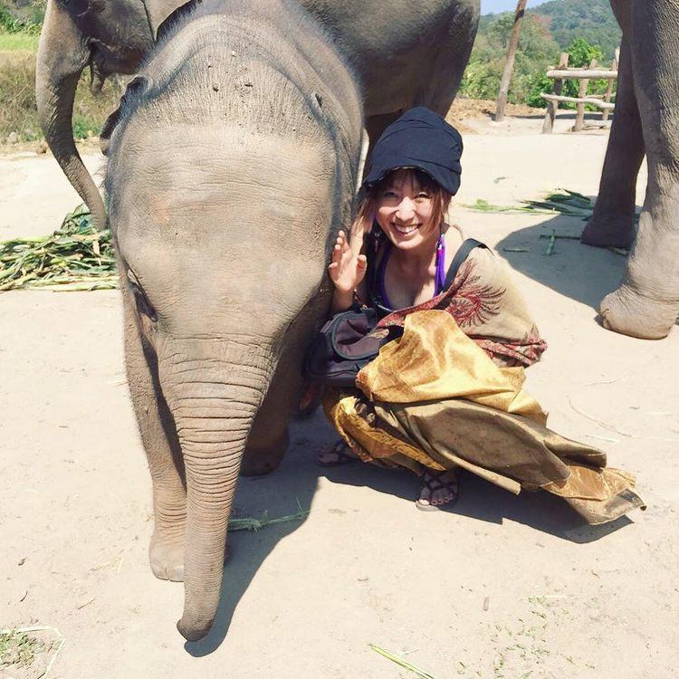 チェンマイ エレファントプライド 象保護園