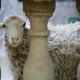【閲覧注意】モロッコの羊解体 犠牲祭