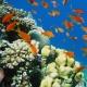 紅海ダイビング!海中絶景写真館